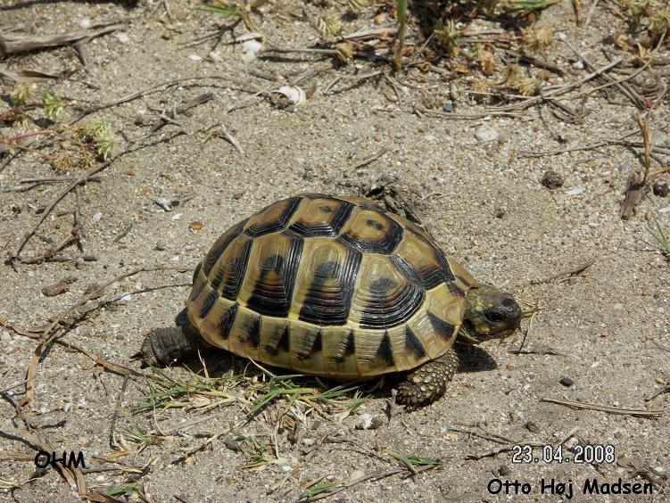 skildpaddearter