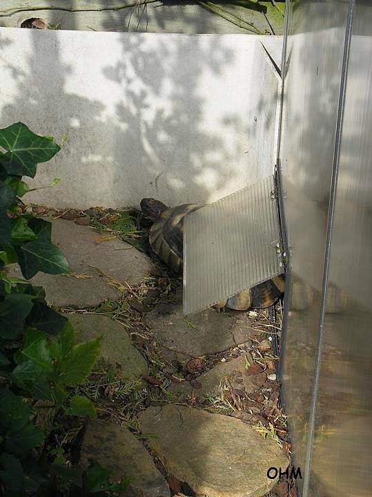 Drivhus til landskildpadder