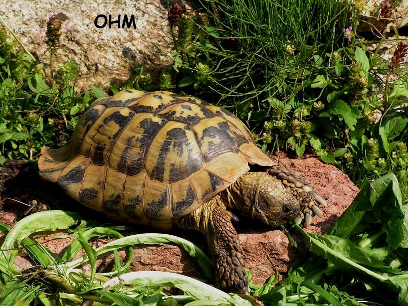 hvordan holder man skildpadder