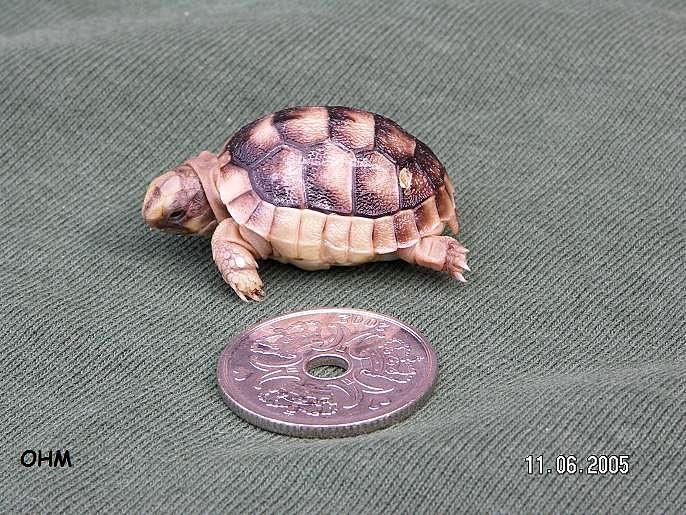 skildpadde akvarie til salg
