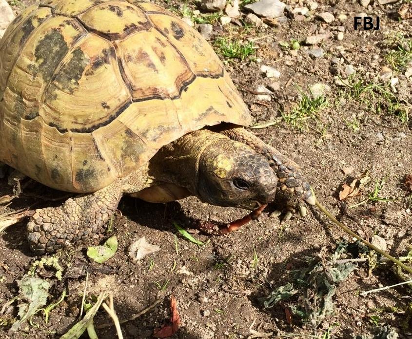 hvad spiser skildpadder