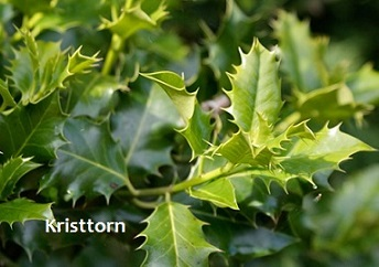 planter under buske