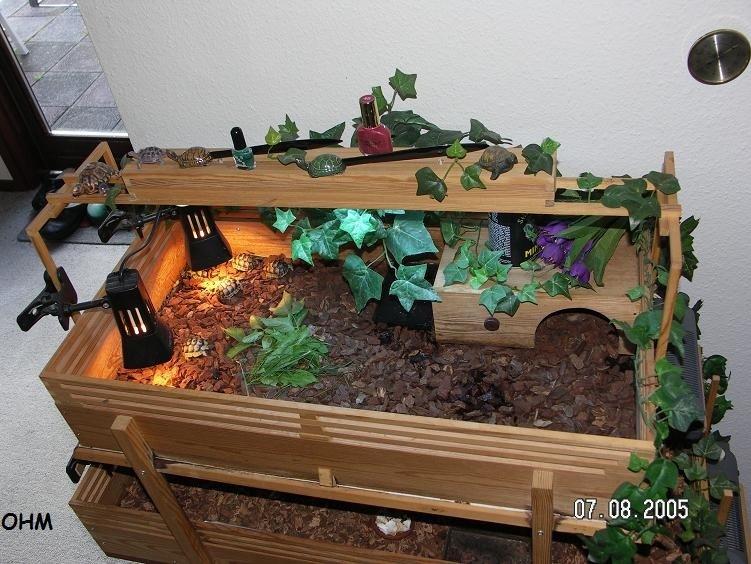 skildpadde akvarie indretning